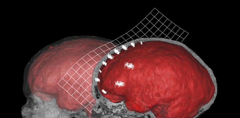 Analizan la influencia en la evolución humana de la anatomía interna ...